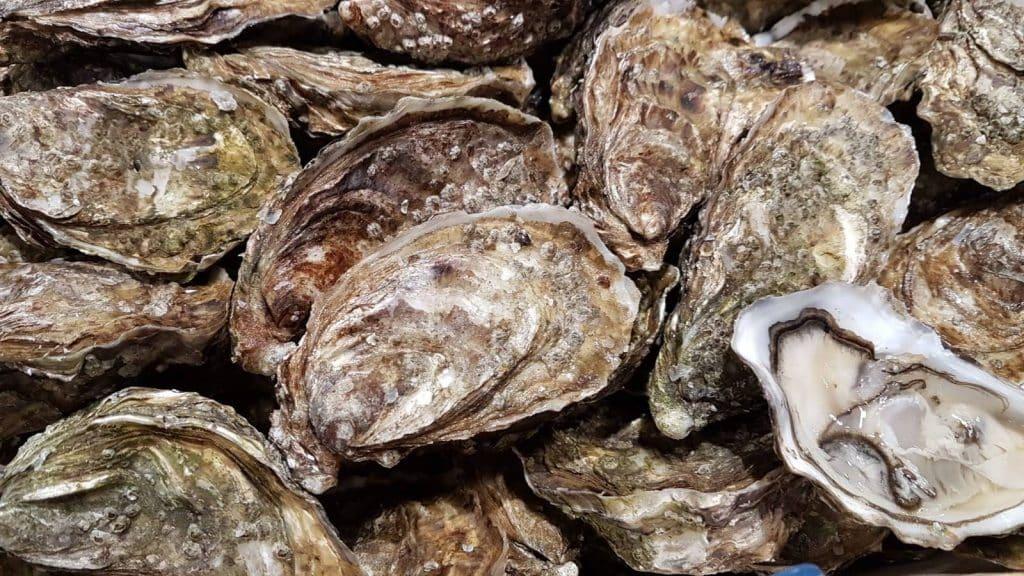 Gros plan sur des huîtres dans une bourriche