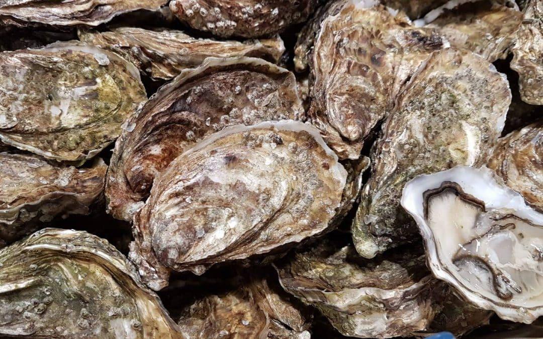 A la découverte des huîtres de notre étal