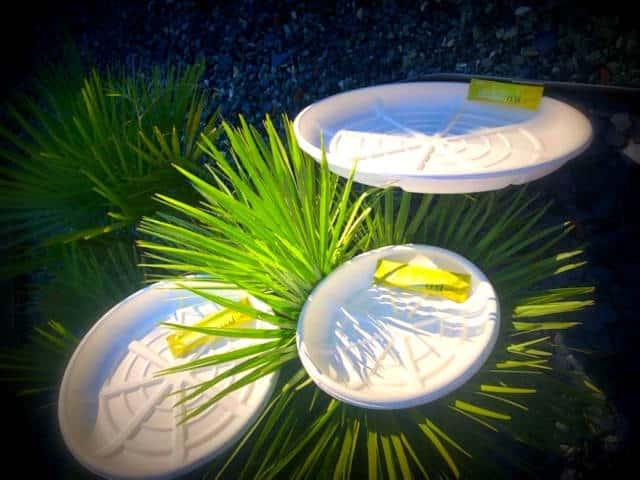 Plateaux recyclables en matière végétale (pour les plateaux d'huîtres et de fruits de mer)